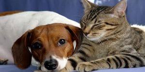 Se former aux métiers animaliers : Cours Animalia