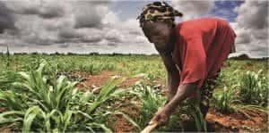 Afrique : des cours d'agriculture en e-learning